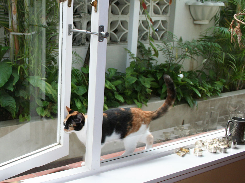 Cat Flap Or Dog Door Alternative Locklatch