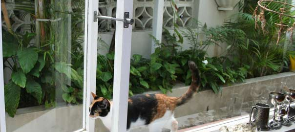 cat entering through window with petlatch