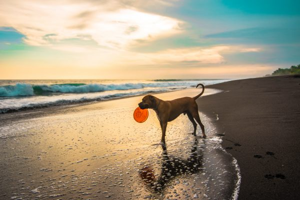 dog friendly beaches south Africa